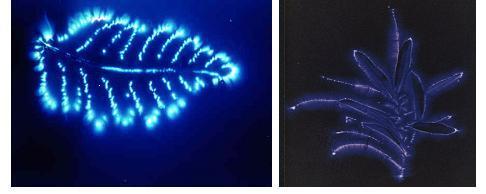 Bio-electromagnetic energy | SikhNet