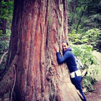 blog-tree.JPG