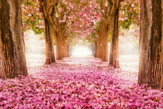pink trees.png