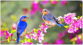 spring birds.png