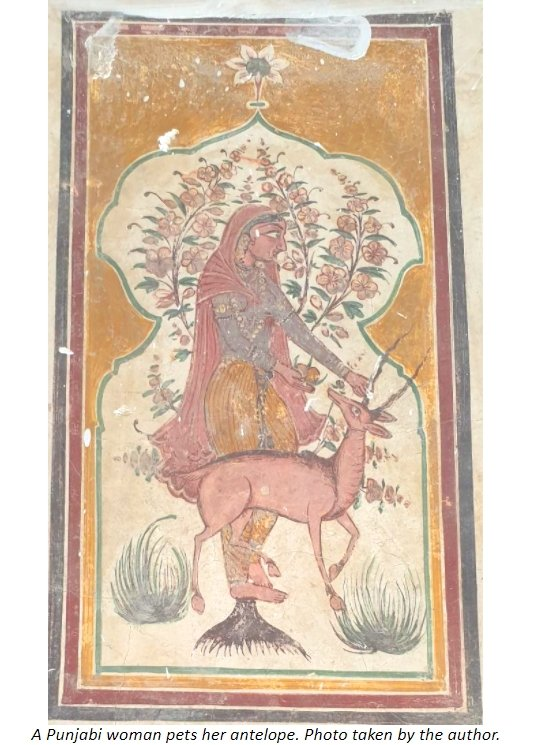 fresco punjabi lady antelope.jpg