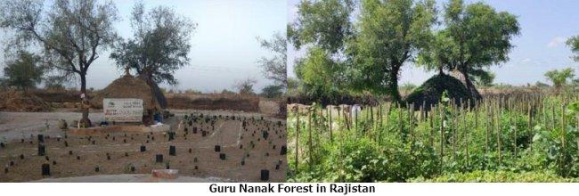 guru nanak forest in rajistan text.jpg