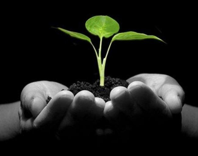 vegan sprout.jpg