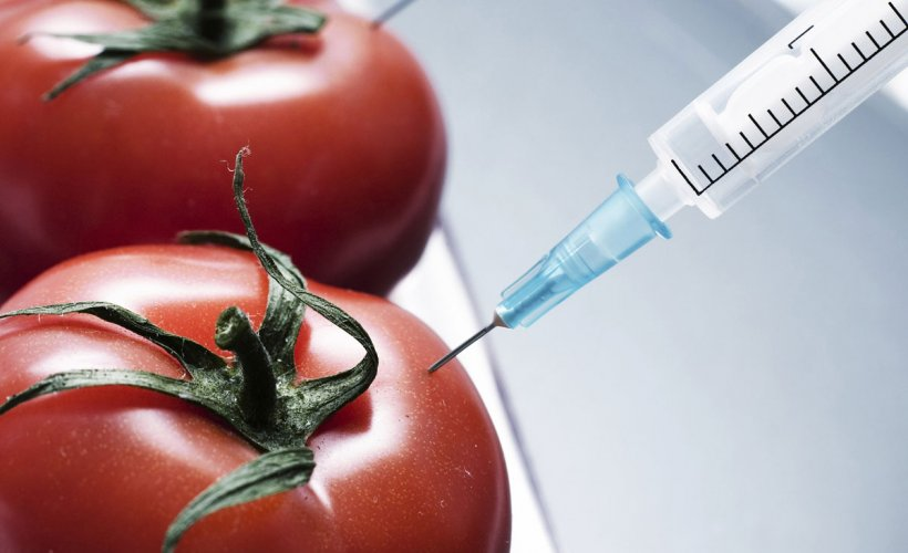 are there dangers of gm food