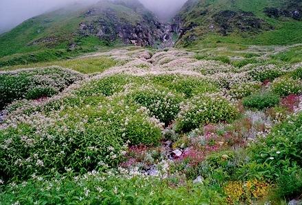 Islas de Nihon Flower1